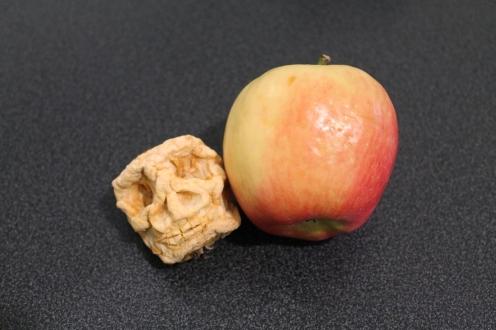 shrunken apple head 7